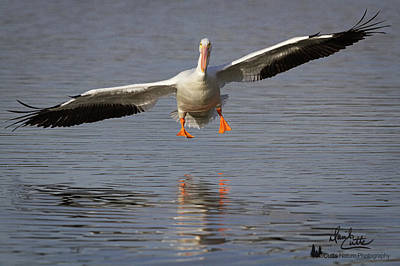 Photograph - Ready For Landing by David Cutts