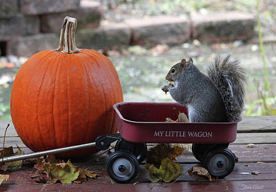 Photograph - Ready To Ride My Little Red Wagon by Trina Ansel