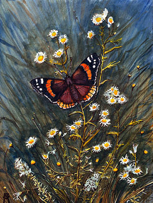 Red Admiral And Wild Aster Art Print