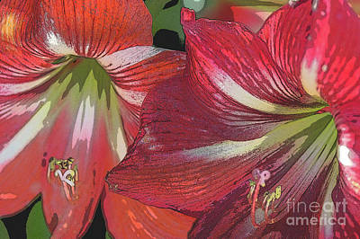 Wall Art - Photograph - Red Amaryllis Flowers by Roslyn Wilkins