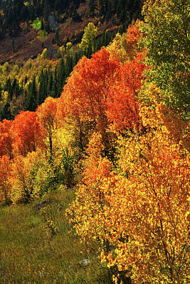 Photograph - Red And Gold Aspens Near Mcclure Pass by Ray Mathis