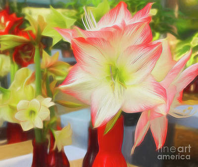 Photograph - Red And White Amaryllis by Sue Melvin
