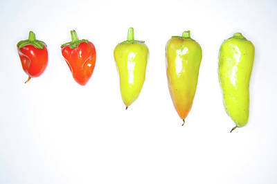 Photograph - red and Yellow Chilies Lined Up by Helen Northcott