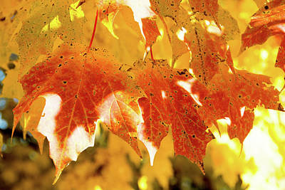Photograph - Red And Yellow Leaves by Jennifer Wick