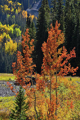 Kitchen Collection - Red Aspen at Red Mountain Pass by Ray Mathis