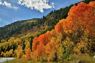 Photograph - Red Aspens Along Highway 133 by Ray Mathis