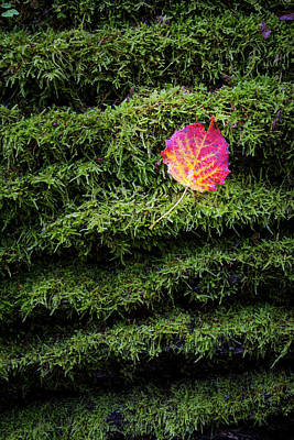 Photograph - Red Autumn Leaf On Mossy Tree, Vertical by Robert Pastryk