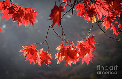 Photograph - Red Autumn Leaves by Colin Rayner
