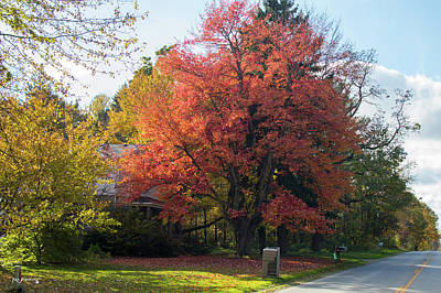 Photograph - Red Autumn Tree by Ken Figurski