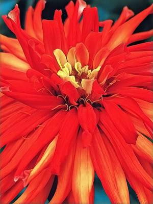 Cindy Digital Art - Red Bliss by Cindy Greenstein