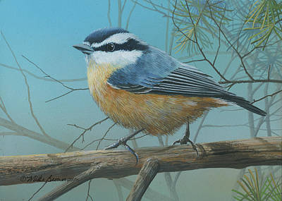 Painting - Red Brested Nuthatch by Mike Brown