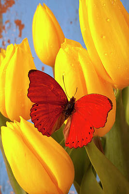 Insect Photograph - Red Butterfly On Yellow Tulips by Garry Gay