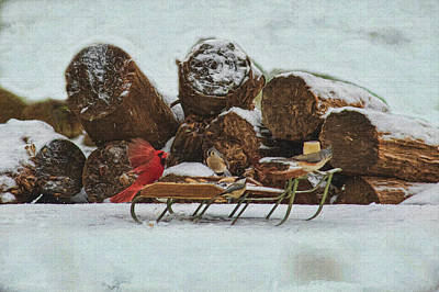Photograph - Red Cardinal Landing On The Sled by Dan Friend