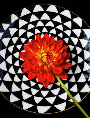 Photograph - Red Dahlia On Graphic Plate by Garry Gay