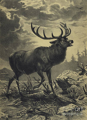 Drawing - Red Deer Beside A Lake by English School