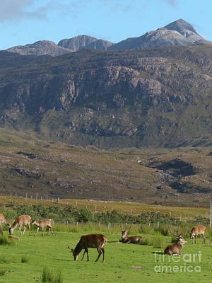 Photograph - Red Deer - Torridon Visitor Centre by Phil Banks