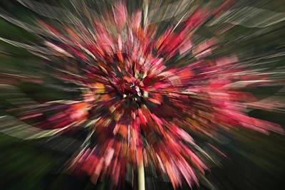 Photograph - Red Explosion by Yulia Kazansky