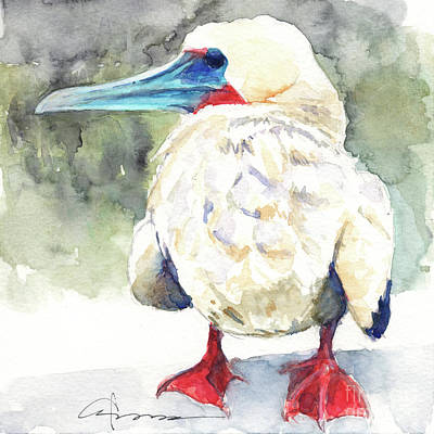 Painting - Red-footed Booby Chick by Claudia Hafner