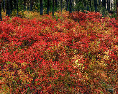 Photograph - Red Forest Light by Leland D Howard