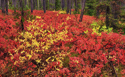 Red Forest Panoramic Art Print by Leland D Howard