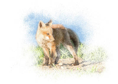 Photograph - Red Fox Kit #14 - Ready To Run by Patti Deters