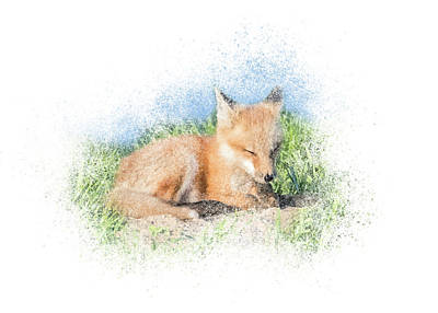 Photograph - Red Fox Kit #9 - Quick Nap by Patti Deters