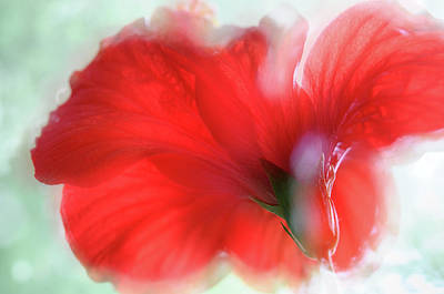 Photograph - Red Hibiscus Flower Dream by Jenny Rainbow