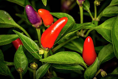 Photograph - Red Hot Chili Peppers by David Morefield