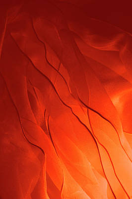 Photograph - Red Hot by Jcarroll-images