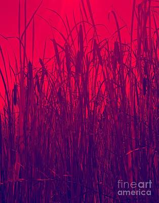 Photograph - Red In The Cattails by Jennifer Lake