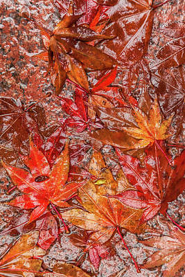 Photograph - Red by Jonathan Nguyen