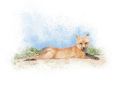 Photograph - Red Kit Fox #16 - Yoga Sphinx by Patti Deters