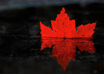 Photograph - Red Leaf Reflection by Tim Kirchoff