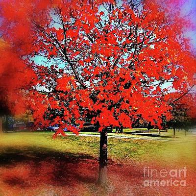 Frank J Casella Royalty-Free and Rights-Managed Images - Red Leaves And Shadows by Frank J Casella