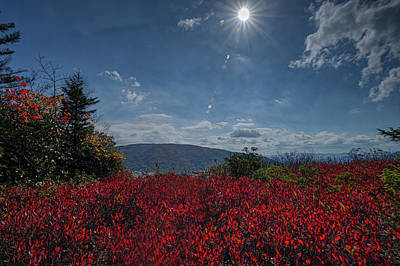 Ps I Love You - Red leaves in the sun by Dan Friend