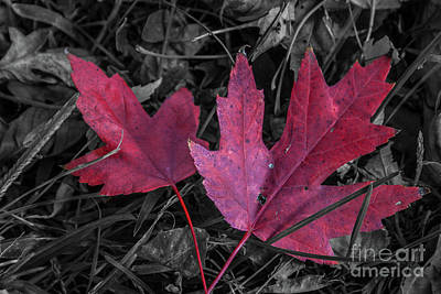 Photograph - Red Leaves by Tony Baca