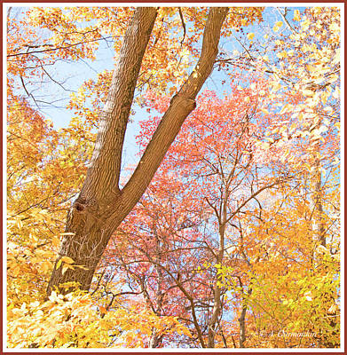 Photograph - Red Maple, Autumn Woods by A Gurmankin