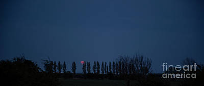 Photograph - Red Moon Photo 3 by Jenny Potter