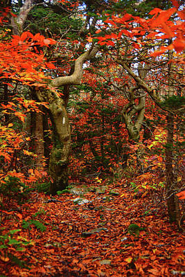 Photograph - Red Oaks And At Blaze Vertical by Raymond Salani III