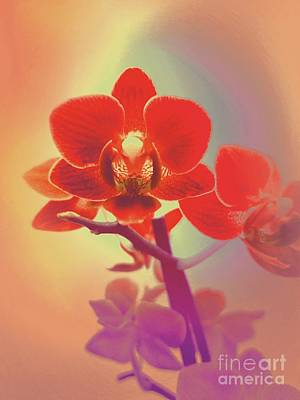 Mixed Media - Red Orchid  by Rachel Hannah