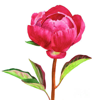 Red Peony With Leaves Original