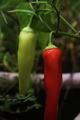 Photograph - Red Pepper by Vadim Levin