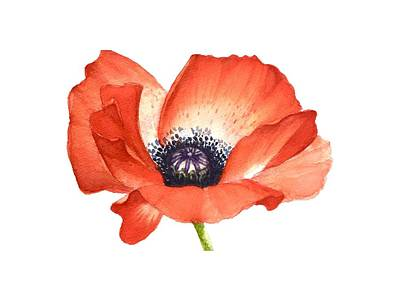 Painting - Red Poppy Flower, Image For Prints On Tshirt by Mahsa Watercolor Artist