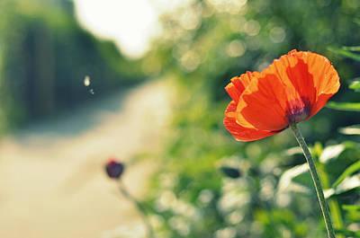 Rotterdam Photograph - Red Poppy Flower On Pad by Photo By Ira Heuvelman-dobrolyubova
