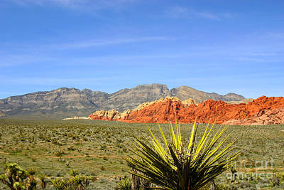 Pop Art - Red Rock Canyon by Sheldon Perry