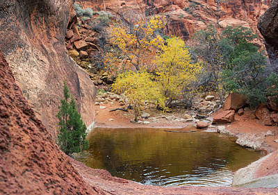 Photograph - Red Rock Oasis by Loree Johnson
