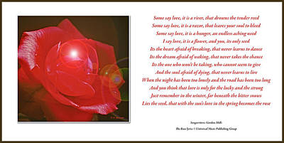 Photograph - Red Rose, Song Lyrics, The Rose by A Gurmankin