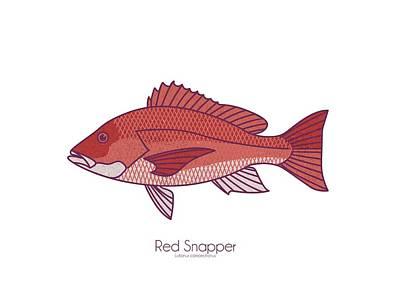Digital Art - Red Snapper by Kevin Putman