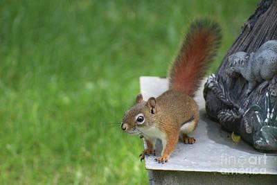 Photograph - Red Squirrel under Bird  Bath by Julie Kindt