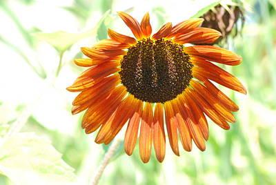 Anne Geddes Florals - Red Sunflower by Ee Photography